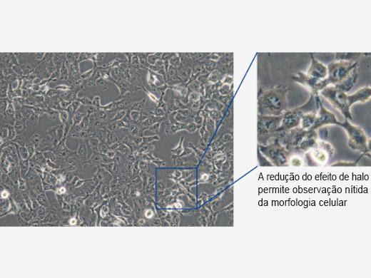 Modo de cultura de células