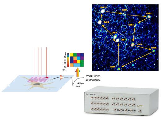 Configurations optimisées pour les expériences électrophysiologiques