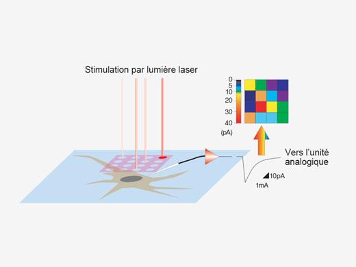 Cartes de réaction à une stimulation3D