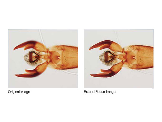 cellSens扩展聚焦成像