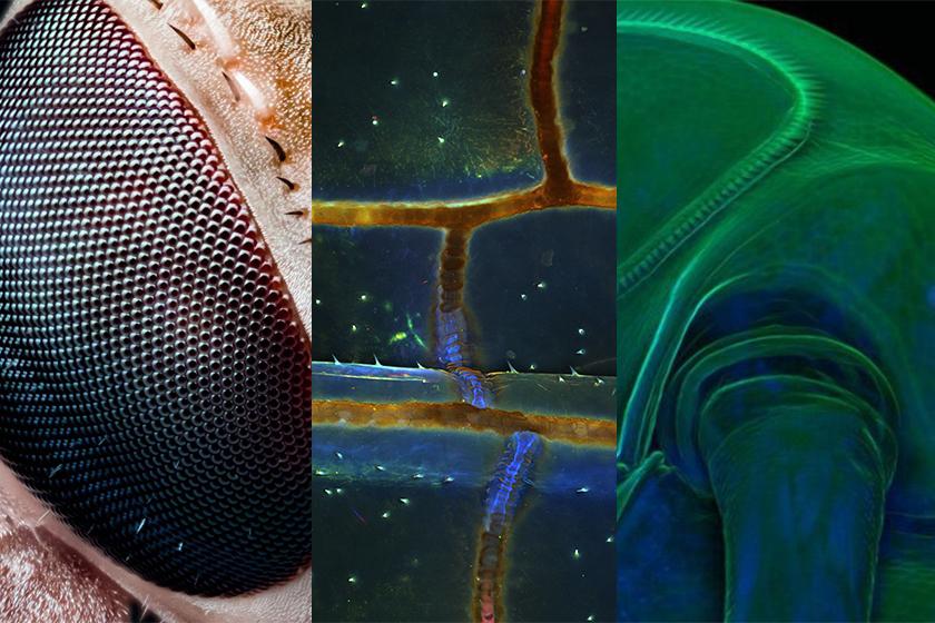 Popular microscopy image