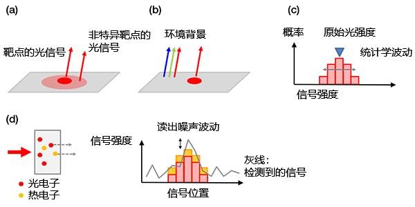 图4 – 背景噪声示例:(a)来自非特异性染色或自发荧光的生物发光背景,(b)载玻片上反射的室内环境光,(c)散粒噪声,(d)包含传感器热电子的相机噪声(左)和读出噪声(右)。可以通过传感器制冷的方式减少热电子。