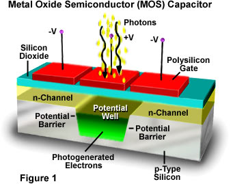 Metal Oxide Semiconductor (MOS) Capacitor | Olympus Life Science