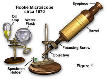 Anatomy of the microscope introduction the microscope illustrated in figure 1 is a simple compound microscope invented by british microscopist robert hooke sometime in the 1660s ccuart Image collections