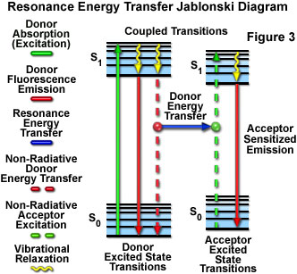 Confocal microscopy fret introductory concepts presented in figure 3 is a jablonski diagram illustrating the coupled transitions involved between the donor emission and acceptor absorbance in ccuart Image collections