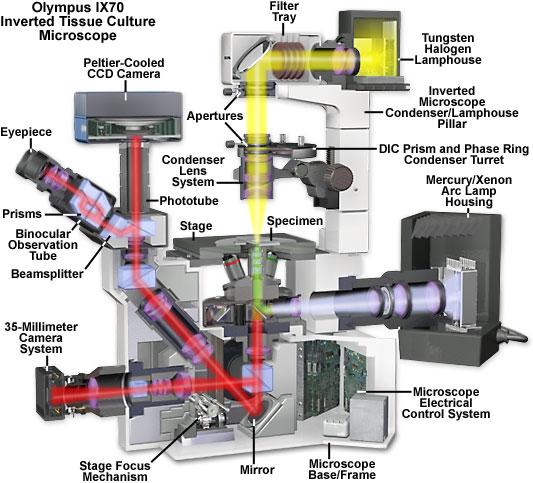 Olympus Ix70 Fluorescence Microscope Cutaway Diagram