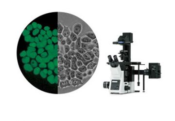 Cell Culture Imaging