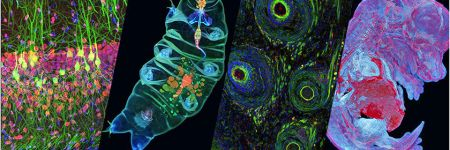 Microscope image contest winners